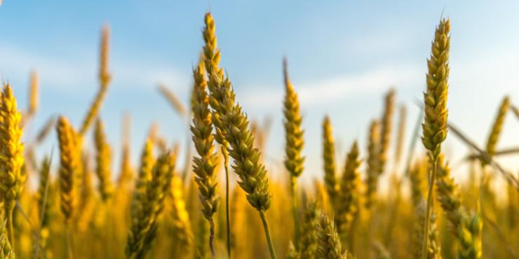 cereales-dieta-macrobiotica