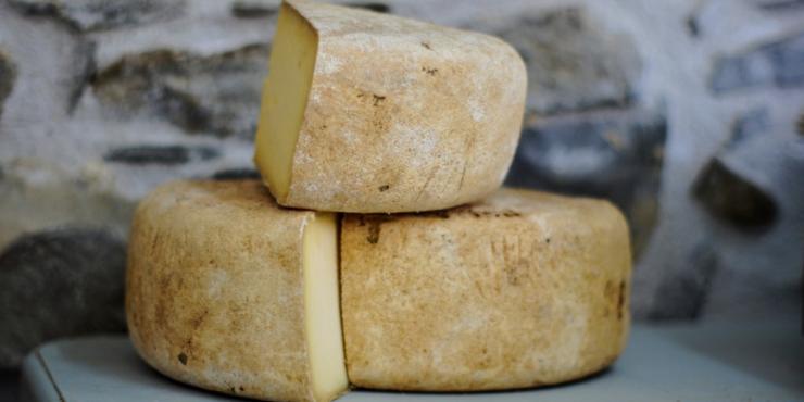 queso-lacto-vegetarianos
